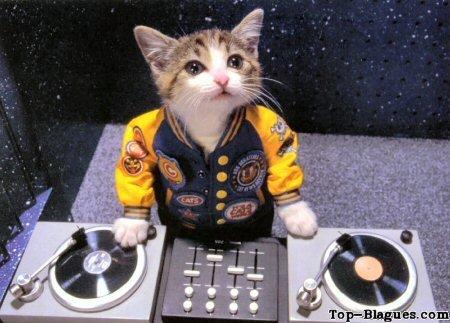 DJ Cat'