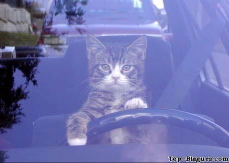 chat le port