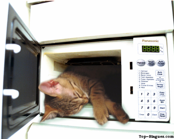 chat au micro-ondes