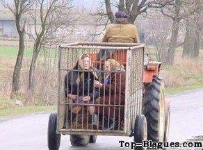 photo drole tracteur